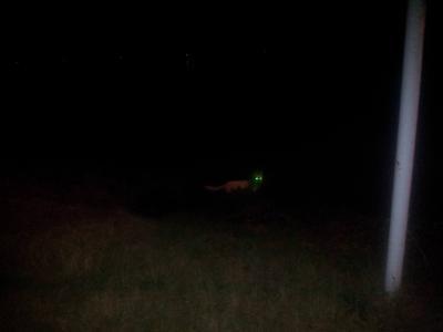 Geisterhund II